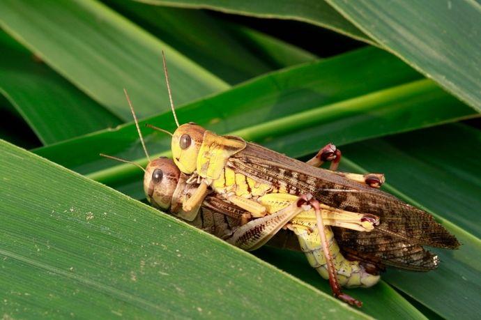 野外求生之可食用的昆虫