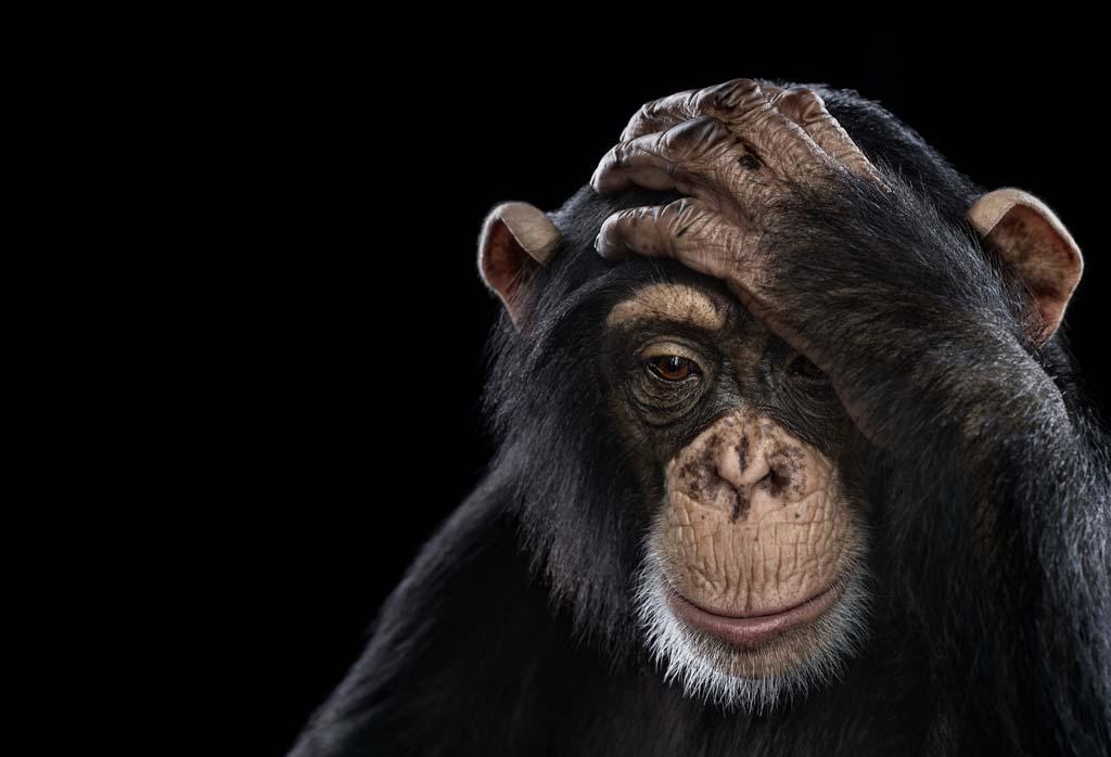 现代病元凶:人类感觉演化与现代世界不协调