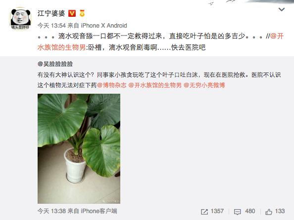 观叶植物滴水观音有毒吗?