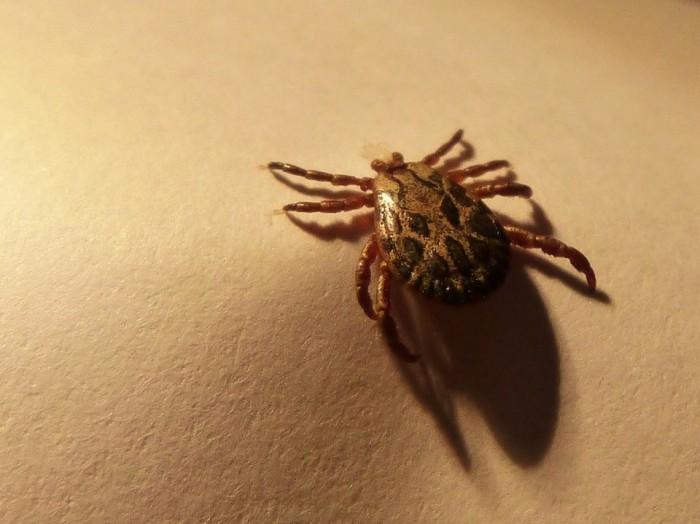 韩国出现首例新型蜱传播病毒